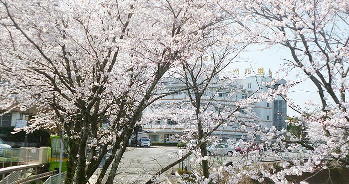 画像:井上会桜坂写真